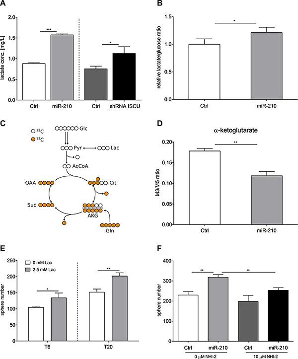 miR-210-induced lactate production enhances self-renewal capacity of colon TICs.