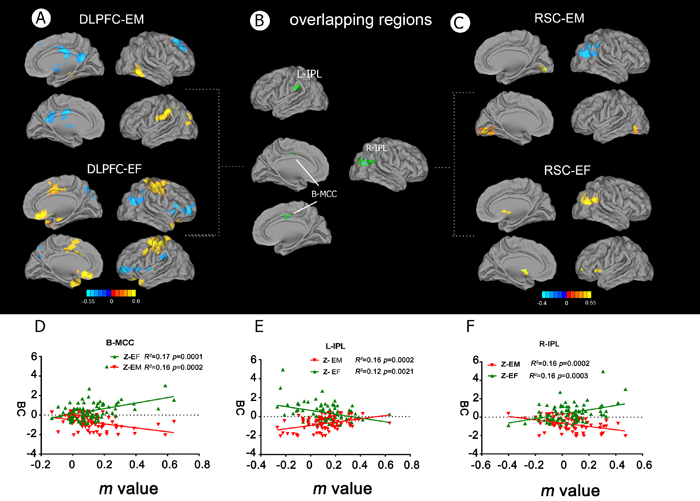 Behavioral significance of altered functional connectivity in the DLPFC and RSC networks in aMCI patients.