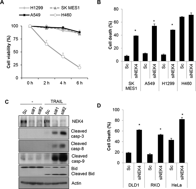 Downregulation of NEK4 sensitizes A549 cells to TRAIL-induced cell death.