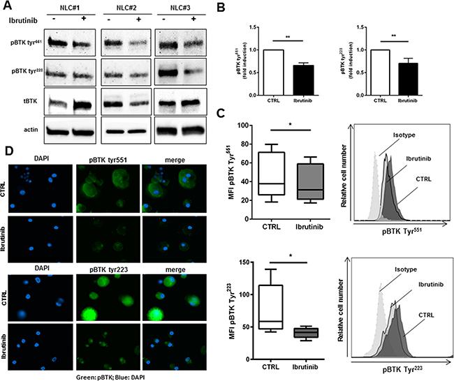 Ibrutinib specifically targets BTK in NLCs.