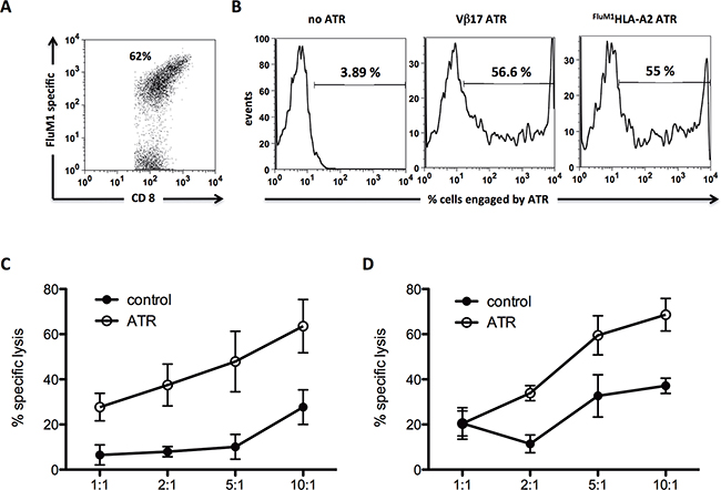 Human FluM1 specific CD8+ T cells can be redirected to kill CD19+ Raji tumor cells.