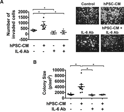 Blocking IL-6 attenuates hPSC-CM induced cell invasion and colony size.