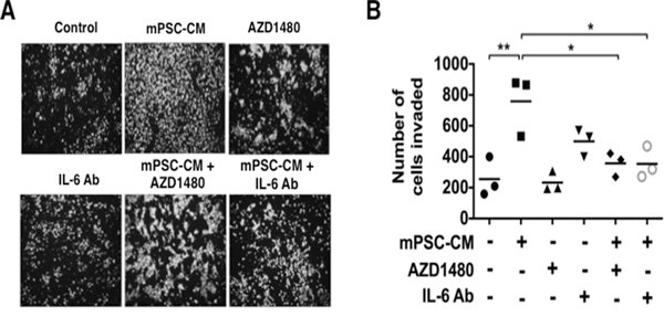 Mouse PSC-CM mediates activation of PanIN cell invasion through IL6-JAK-STAT3 signaling.