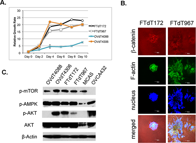 The Pten disruption contributed to the rapid proliferation of the Dicer-Pten DKO mouse cancer cells.