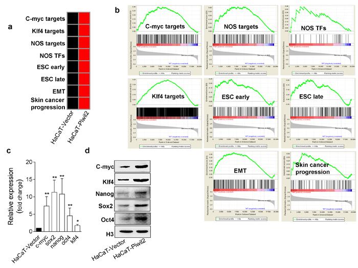 Piwil2 facilitates the establishment of a cancer stem-like cell gene-set enrichment pattern.