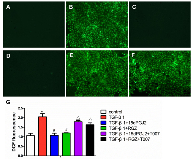 Activation of PPAR-γ inhibited TGF-β1-induced ROS production.