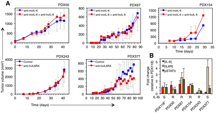 Effect of therapies against IL-6 signaling on the growth of different breast cancer PDXs.