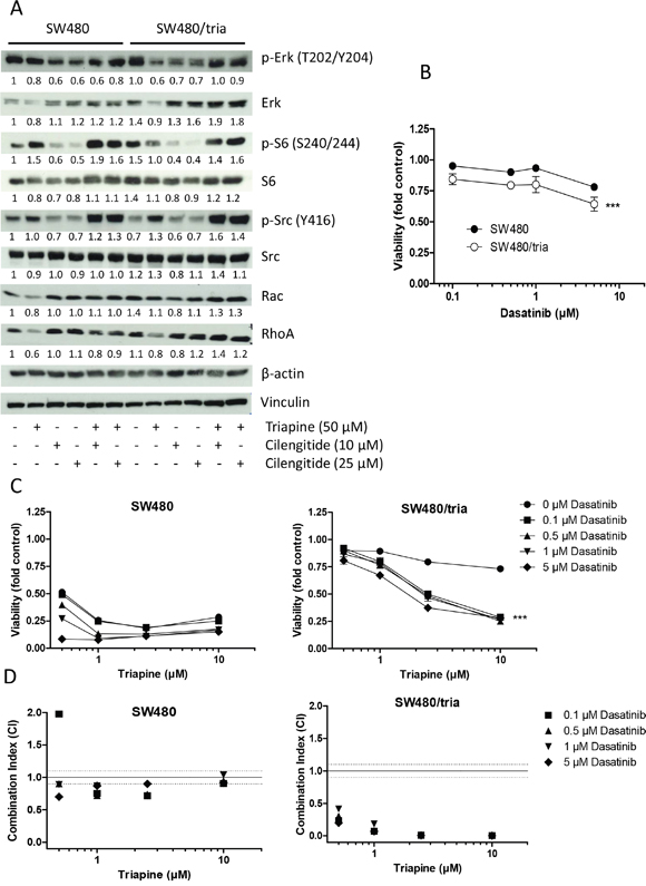 Activation of integrin-mediated downstream signaling pathways in SW480 as compared to SW480/tria cells.