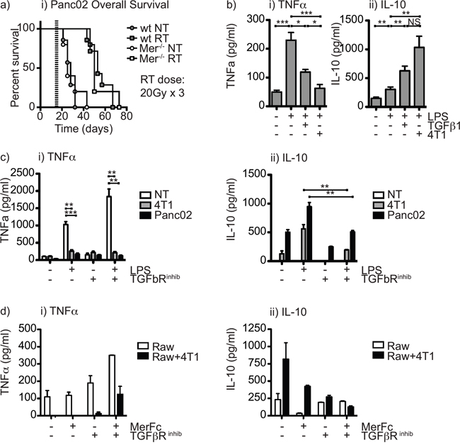 The combination of Mertk knockout and TGFβ inhibition restores proinflammatory function of macrophages in the presence of irradiated cancer cells.