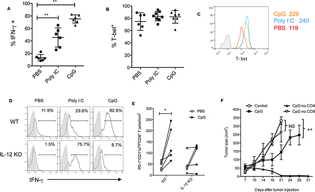 CpG-induced effector CD8+ T cell responses are dependent on IL-12.