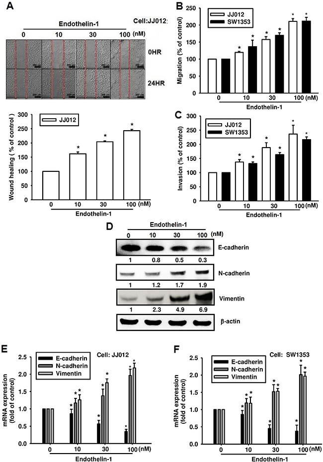 ET-1 promotes cell migration and EMT in chondrosarcoma cells.
