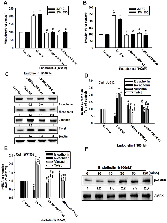 AMPK is involved in ET-1-induced EMT and cell migration.