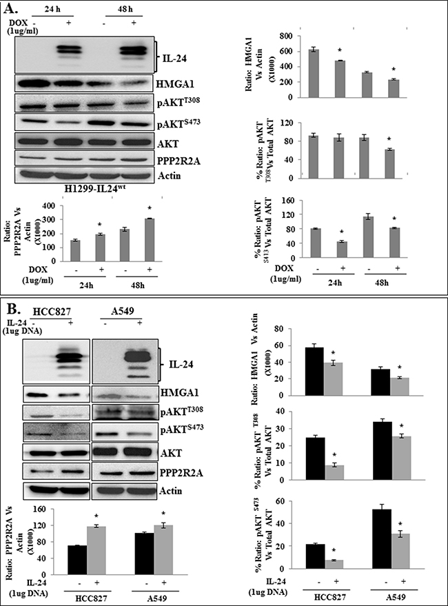 Attenuation of HMGA1 by IL-24wt inhibits AKT activation in H1299-IL24 lung cancer cells.