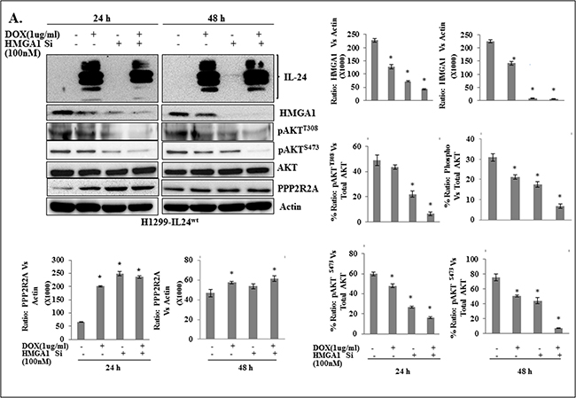 A combination of IL-24wt and HMGA1-siRNA showed greater inhibition of AKT activation in lung cancer cells.