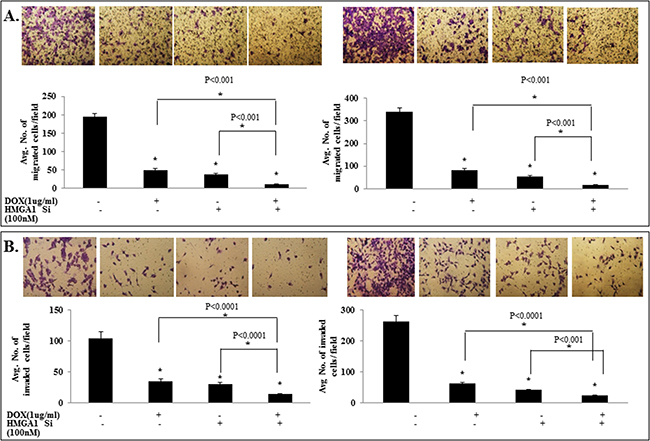 IL-24wt in combination with HMGA1 siRNA treatment exhibited enhanced inhibition of tumor cell migration and invasion.