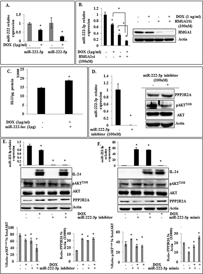 Modulation of miR-222-3p enhances the inhibitory activity of IL-24wt on HMGA1 signaling in H1299-IL24wt cells.