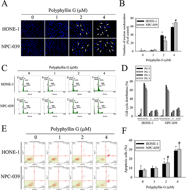 Polyphyllin G induces apoptosis in HONE-1 and NPC-039 cells.