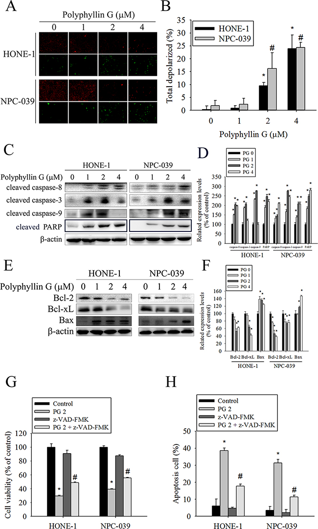 Effects of Polyphyllin G on apoptotic and anti-apoptotic protein expression in HONE-1 and NPC-039 cells.