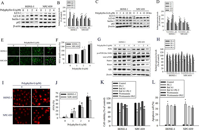 Polyphyllin G induces autophagy in HONE-1 and NPC-039 cells.