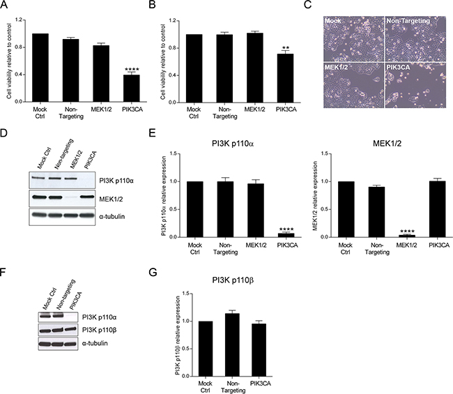 Inhibition of PI3K p110α decreases viability in HCT116 and SW480 CRC cells.