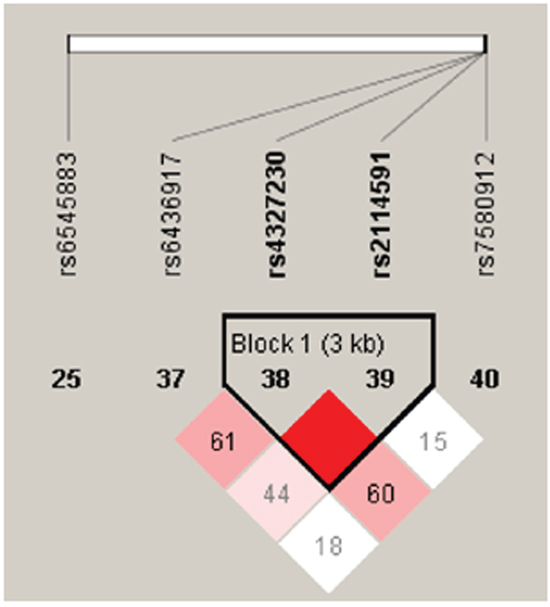 Haplotype block map for SP110 tSNPs.