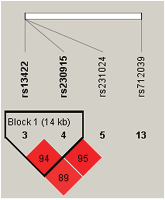 Haplotype block map for PMP22 tSNPs.