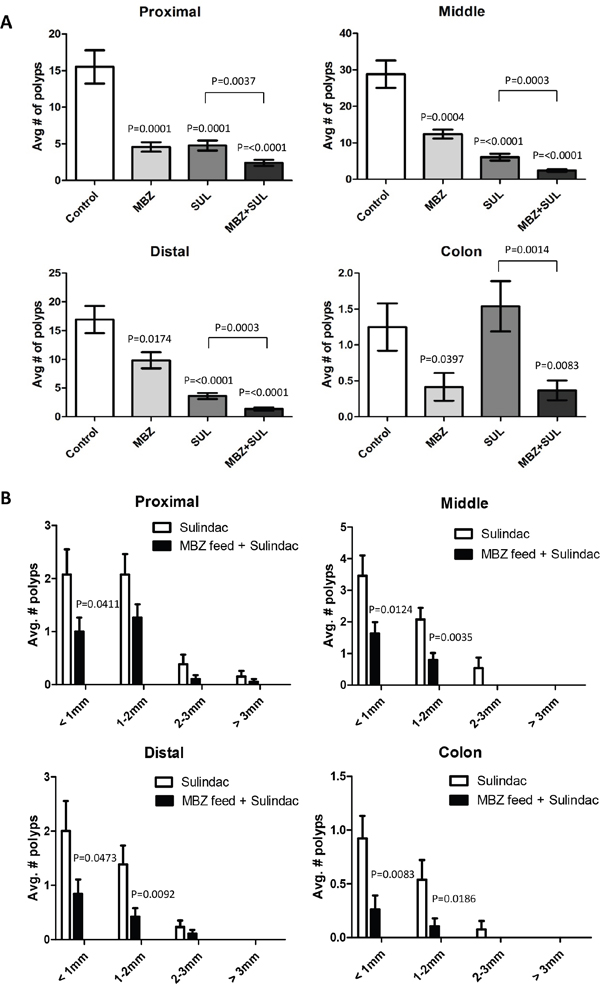 The combination of low dose MBZ plus sulindac act synergistically in reducing both the occurrence and size of tumors in all segments of the ApcMin/+ mouse intestine.