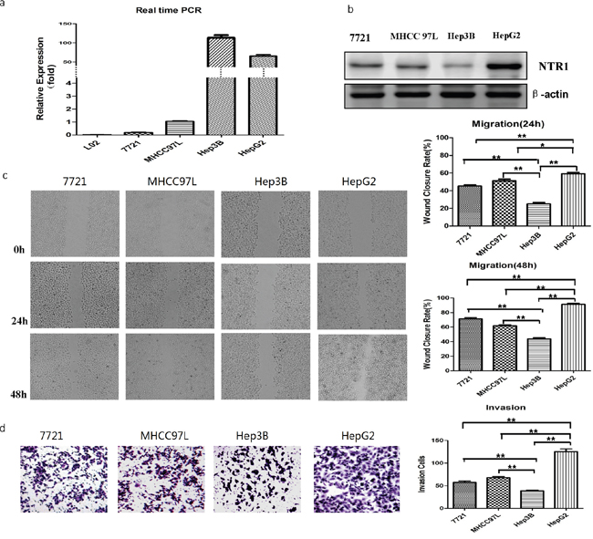 NTS/NTR1 co-expression was correlated with tumor invasion potentials of HCC cell lines.