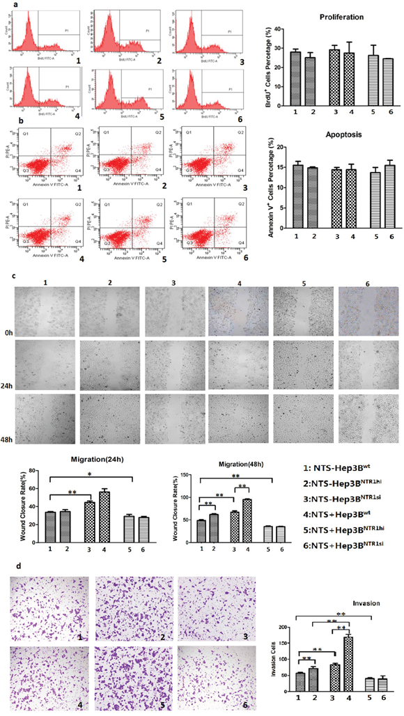 NTS/NTR1 co-expression promoted tumor invasion rather than proliferation of HCC cells.