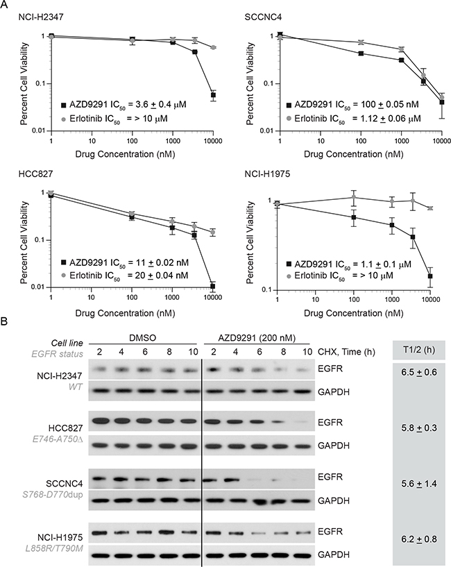 AZD9291 treatment is effective in erlotinib-resistant cells and induces EGFR degradation independent of kinase mutations.