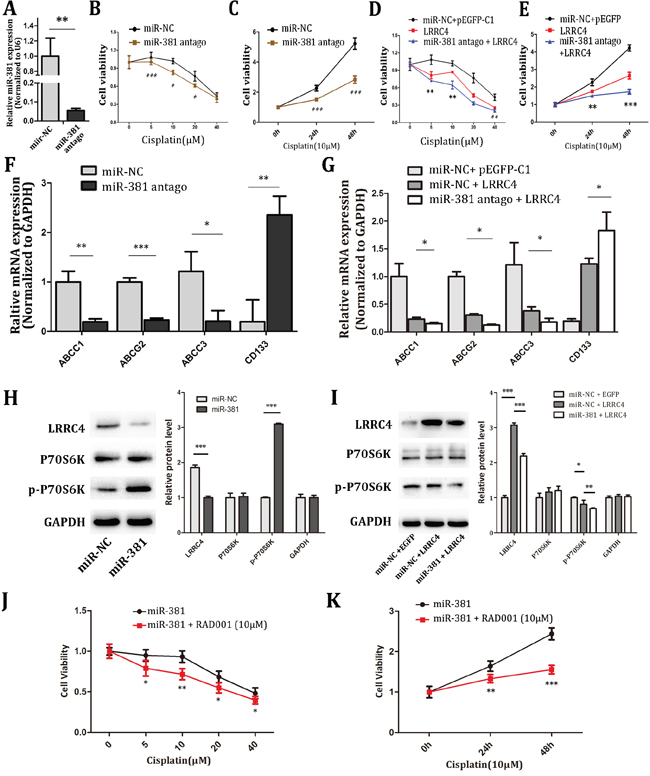 miR-381 antago increased the chemotherapy sensitivity of MG-63 cells by targeting LRRC4 transit mTOR pathway.