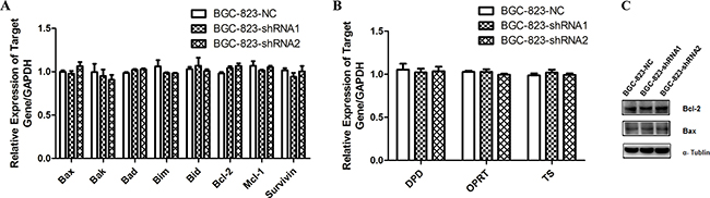 The expression of apoptosis-associated and 5-FU metabolism related genes in DCTPP1-knockdown and control BGC-823 cells.