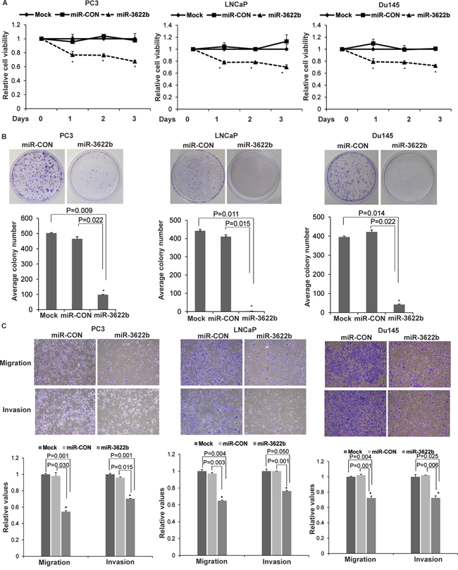 miR-3622b overexpression suppresses tumorigenicity in vitro in prostate cancer cell lines.