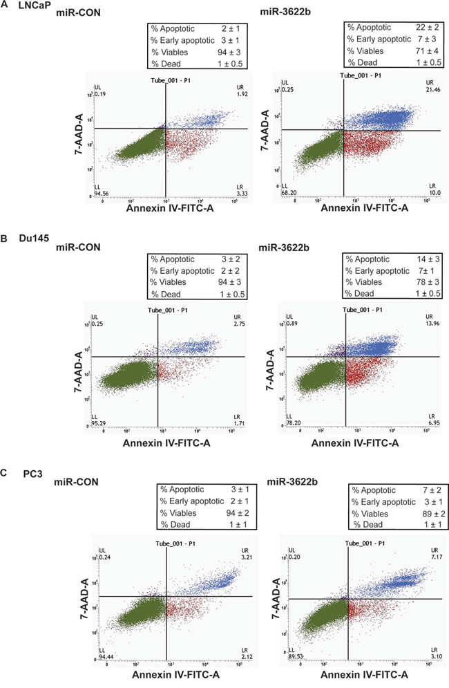 miR-3622b overexpression induces apoptosis in prostate cancer cell lines.