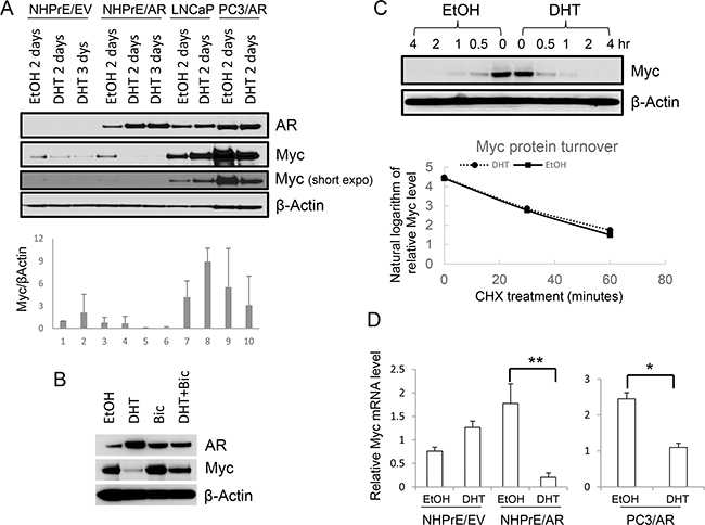 Androgen differentially regulated MYC expression.