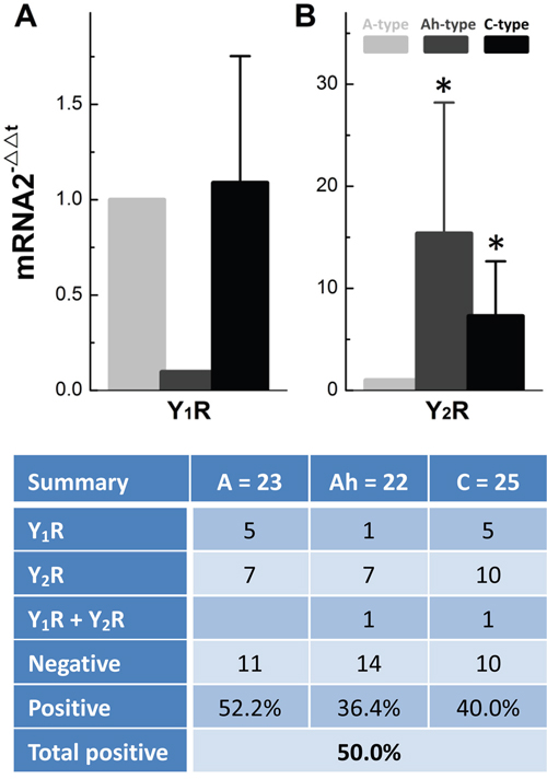 Cell-specific expression and distribution of mRNA of Y1R and Y2R in identified single BRNs from adult female rats.