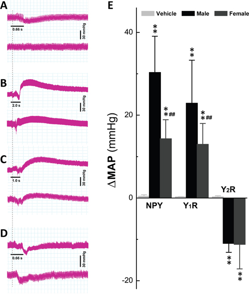 Y1R and Y2R activation-mediated changes in blood pressure by NG microinjection.