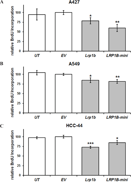 Lrp1b overexpression attenuates cellular proliferation of non-small cell lung cancer cell lines in vitro.