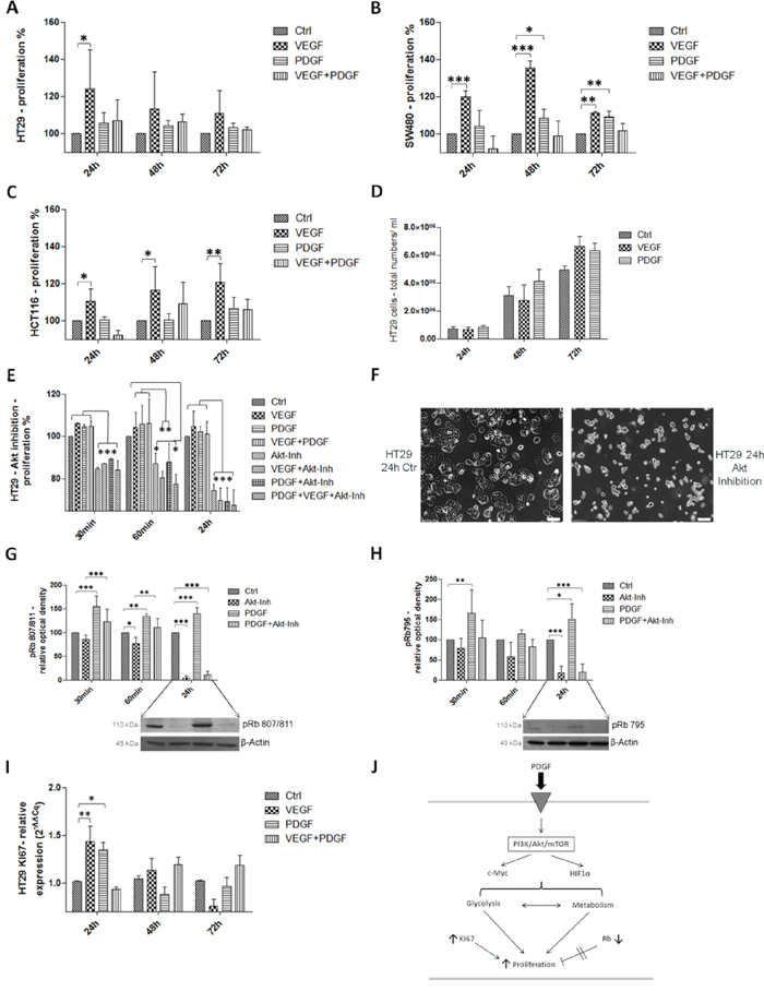 Influence of PDGF stimulation and Akt-pathway inhibition on proliferation in HT29, SW480, and HCT116 J.