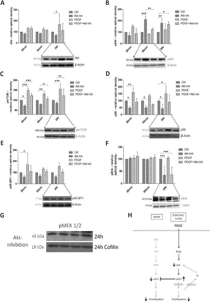 Western Blot analysis showed the effects of PDGF stimulation and/or Akt inhibition on the PI3K/Akt/mTOR and MAPK pathway in HT29 cells H.