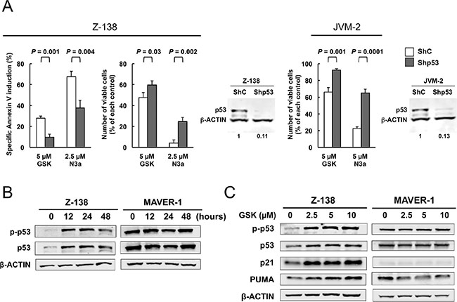 The PPM1D inhibitor GSK2830371 induces cell cycle arrest and apoptosis in mantle cell lymphoma (MCL) cells partially in a p53-dependent manner.