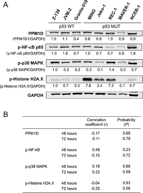 Basal levels of PPM1D and phosphorylated protein levels of PPM1D targets did not determine the sensitivity of mantle cell lymphoma (MCL) cells to GSK2830371.