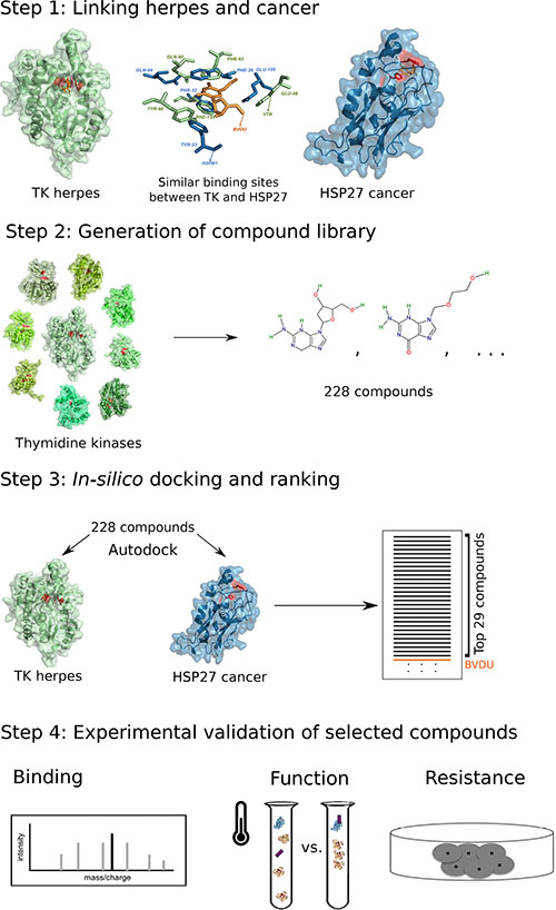 Computational drug repositioning pipeline to predict HSP27 binders.