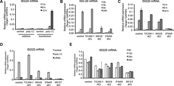 ISG20 is induced by type I IFN but not induced by HBV replication.