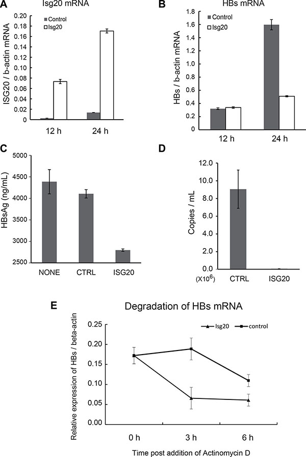 ISG20 down-regulates HBV RNA via posttranscriptional mechanism.