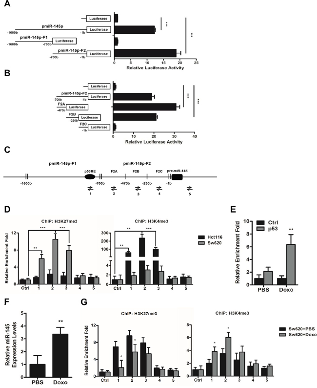 A histone methylation involved mechanism regulates the expression of miR-145 through its core promoter regions.