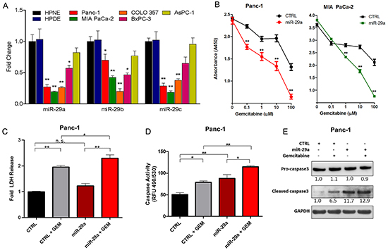 miR-29a increased sensitivity of chemoresistant PDAC cells to gemcitabine treatment.