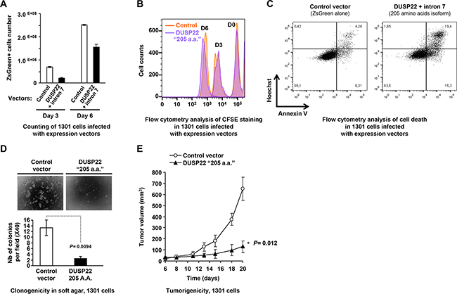 Tumor suppressive effects of DUSP22 in lymphoid T cells.