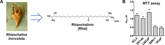 Effect of Rhiz on viability and proliferation of prostate cancer cells.