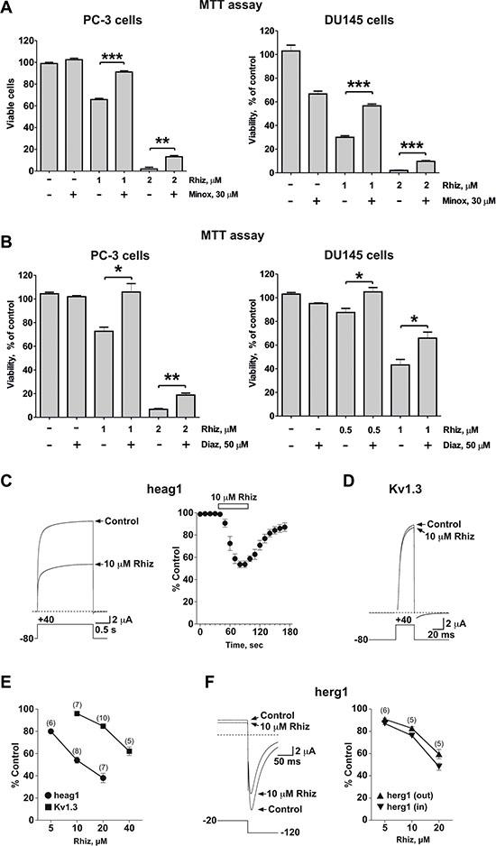 Inhibitory effect of Rhiz on potassium channels.